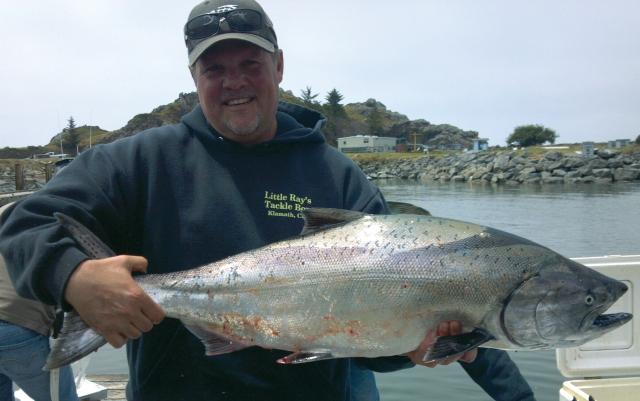 KP CC salmon