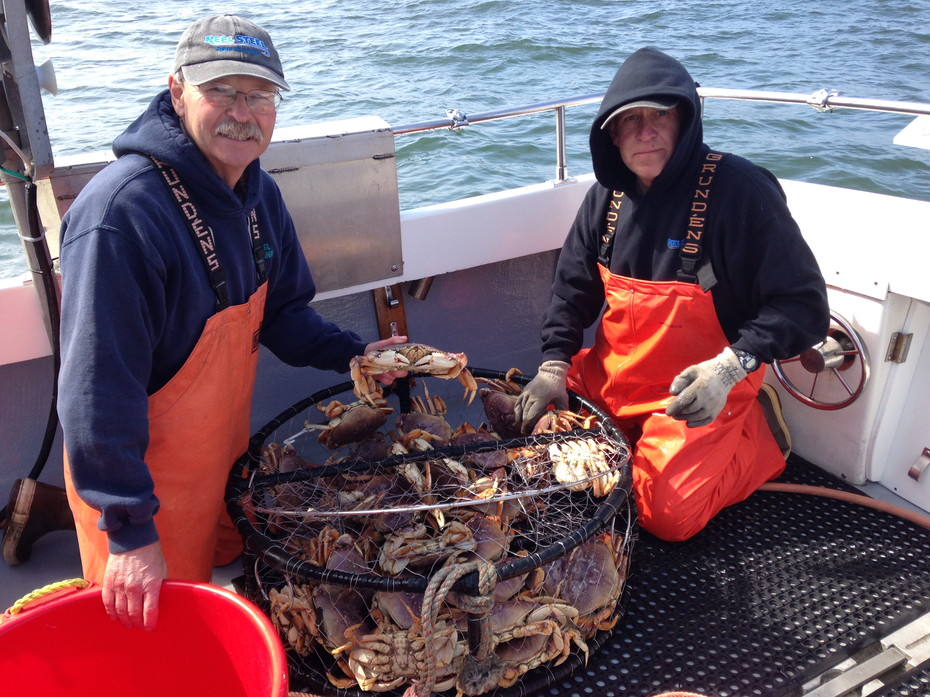 Sport crab opens saturday domoic acid warning likely for Nc fishing regulations 2017